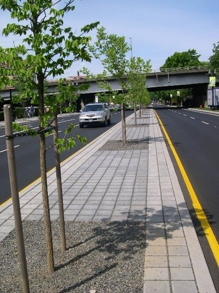 Hardscaped roadway median with planted trees. Two lanes of traffic going different directions line the median. In the background an overpass is visible.